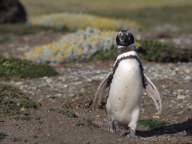 ARGENTINA E PATAGONIA: Tour Patagonia Pinguini e Balene 2019