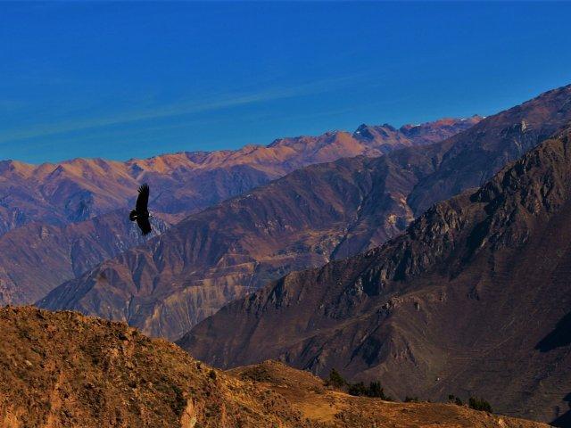 Pisco Tour (Arequipa, Colca, Cusco, Machu)