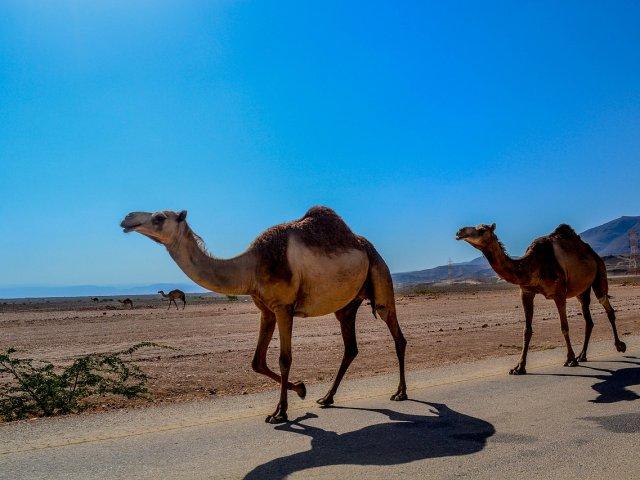 Nomad Oman