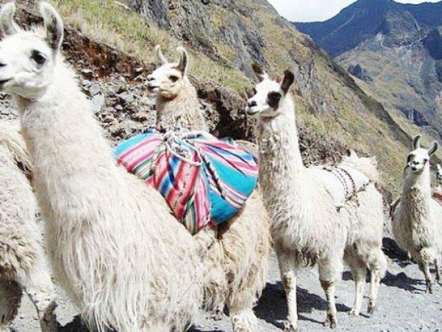 PERU': TOUR PERU BUDGET