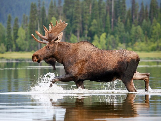La natura del Canada Orientale