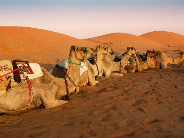 OMAN: Oman, il paese di Sindbad tour di gruppo Gennaio