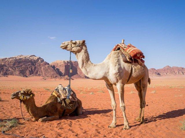 GIORDANIA E ISRAELE 2021 2022: GIORDANIA INCANTATA TOUR SPECIALE CAPODANNO 2021 2022 SCONTO €. 100 P.P. PRENOTAZ. ENTRO 31/10/21