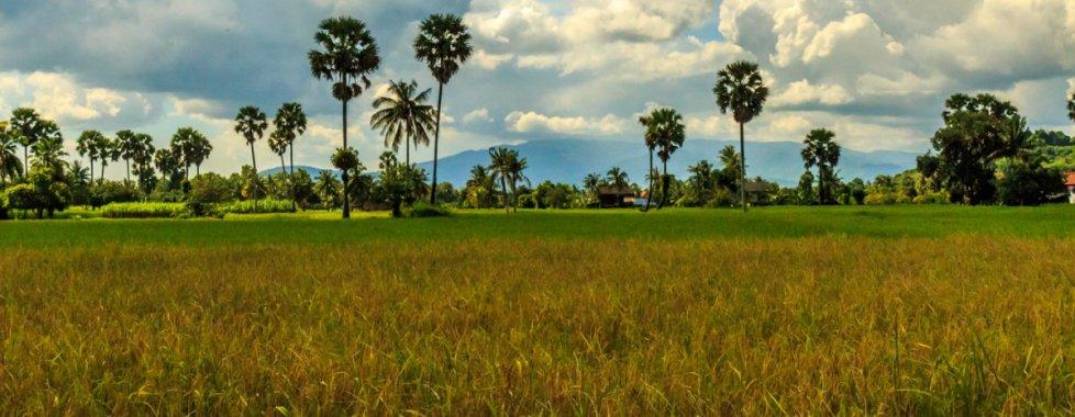 paesaggio cambogiano