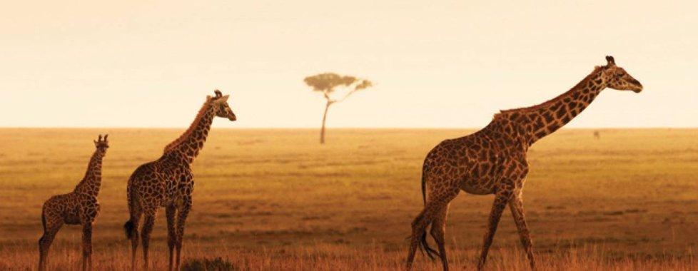 Parco Serengeti