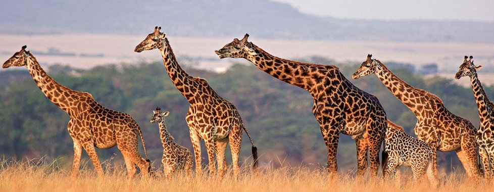 Tanzania nozze