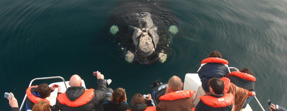 Balene argentina penisola valdes