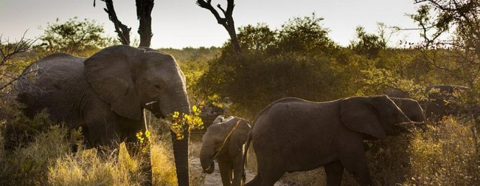 capodanno sudafrica 2