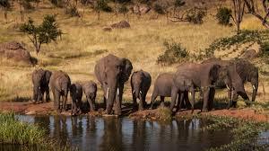 elefanti che si abbeverano