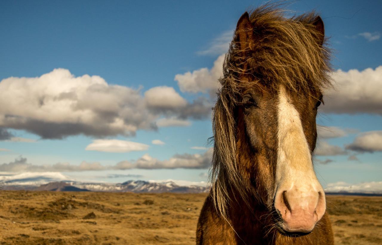 Islanda